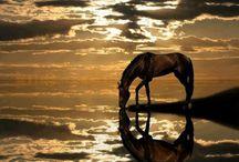 Grand horses