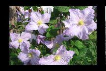 Садовый ландшафт / Садовые цветы растения