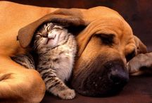 Cats and Dogs / Pet Photos that Make us Smile