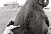Ελέφαντες ❤️❤️❤️❤️