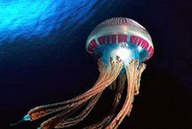 Art / Jelly fish
