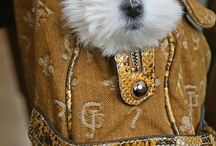 Cachorrinhos - Puppies