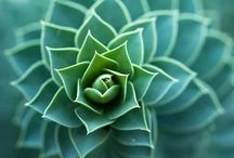 geometria y naturaleza