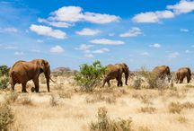 East Africa - Clippers Quay Travel / East African Destination Pictures