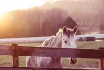 Year of the Horse / Those born in the Year of the Horse are said to be extremely confident and independent. 2014 is set to be a time of adventure and an excellent year for travel. A Horse year is considered to be fortunate and filled with luck!