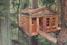 Huge trees and treehouses