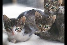 Kociaki i szczeniaki / Kociaki i szczeniaki do adopcji