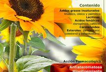 Healthy foods — Plants