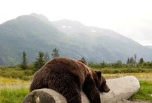 Thebearsontheroad
