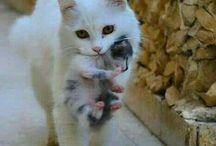 Gatos Bebé