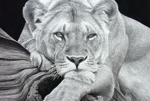 ~ Wildlife-Animals ~ Pencil ~