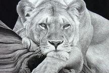 ~ Wildlife-Animals ~ Pencil ~