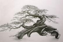 Bonsai Sketches