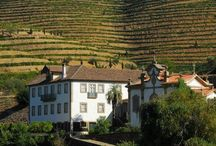 Port Wine and the Douro Valley / Get to know more about #Douro #Valley, one of the most beautiful #wine #regions in the world, and its famous #Port #wine! It includes recommendations on the best #vineyards and #hotels in the region. Enjoy!