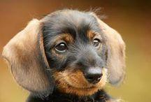 CUTE PUPPY / This puppy is SO SO CUTE