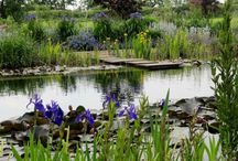 Natural ponds and pools