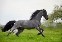 Biele kone