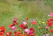 How many kinds.... / ... of sweet flowers grow in English country gardens, on mountain tops, alongside streams, by the seaside, in deserts, in meadows, in the wild, on rockeries, on the plains, in dells, along hedgerows & within the woodlands or on forest floors?