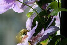 Flowers / Gardens / Så smuk kan have være !