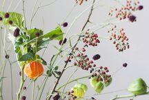 Bloem/ plant idee