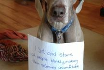 Dog shaming / Dogs