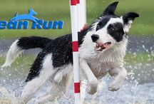 Dog Training and Sports / Information about dog training and dog sports such as agility, rally obedience, etc.