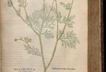 Botanical prant
