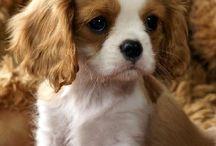 I wish I had a pet.....