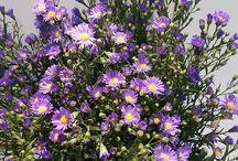 Flowers from South-Africa / Flowers from South-Africa