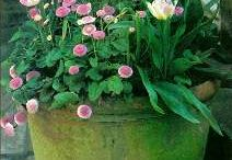 Gardening / by Elaine Jones