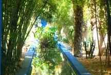 #11 Marjorelle Garden