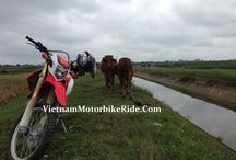 HANOI MOTORBIKE TOURS, Vietnam MotorbikeRide / Traveling around Hanoi city by motorbike is the best way to see the real life of Vietnamese. Hanoi motorcycle tour to Duong lam is our best selling daily motorbike tours from Hanoi. HANOI MOTORCYCLE TOURS - http://vietnammotorbikeride.com/