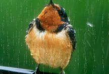 Rain# <3