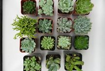 My Green Thumb Garden / by Lori Irvin