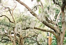 Weddings | Forsyth Park