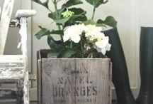 blomsterpotter