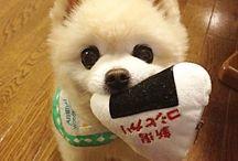 Puppy love♥♥