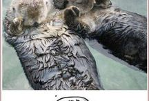 Cute, fuzzy animals that make me more (or less)  productive / by Killiann Clary