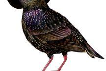 Art we like-Alice Tams / Alice Tams create love illustration of birds