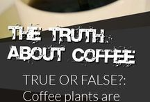 Coffee Lovers' Board / Everything we know about #coffee goes here. We'll hunt down some other fun things having to do with coffee, too.  / by WebMD