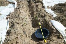 backyard improvement project