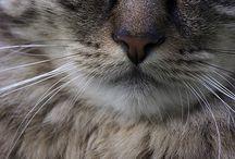 Gatos em Fotografias