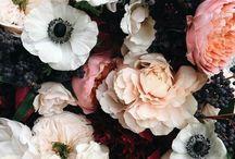 flower/dark