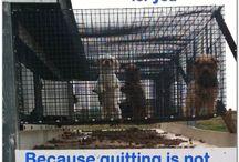Rescue the animals