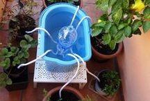 Cómo regar las plantas si te vas de vacaciones