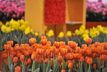Canada Blooms / Canada Largest Flower and Garden Festival / by McCoy Tours