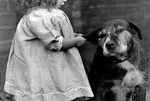 wonderful animals / animals