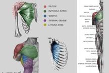 人体アナトミー / 人体資料用