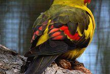 Színes madár