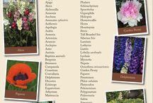 Garden Information